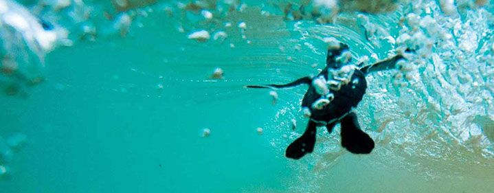 THE HATCHERY: Turtle Conservation Experience - WHALE MALL, Queensland Museum - Tickets
