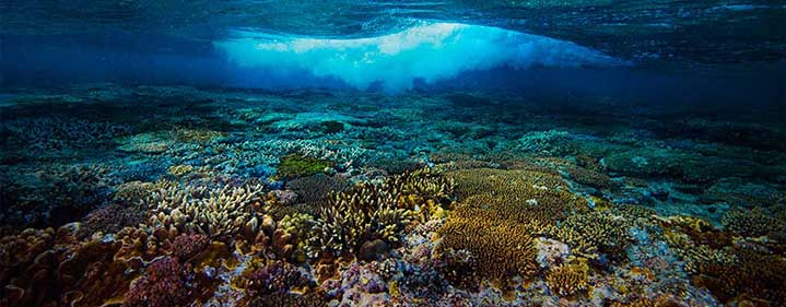 OUR JEWELLED SEAS: Future-Proofing the Great Barrier Reef - Concert Hall, QPAC - Tickets